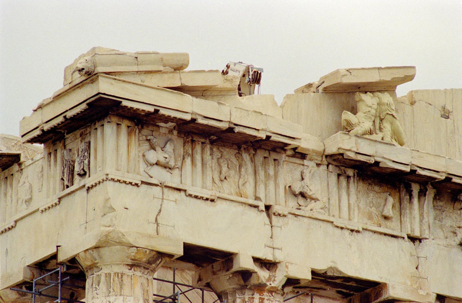 glypta parthenona 11
