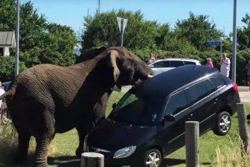 επιθέσεις ζώων