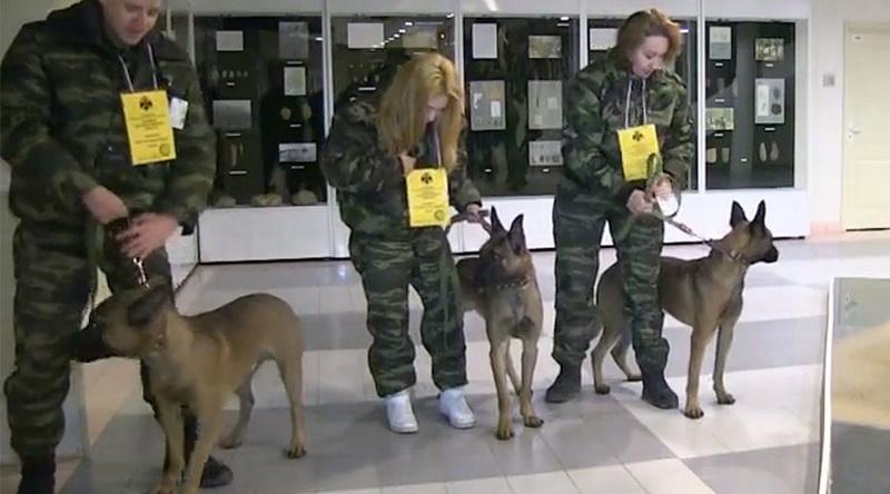 Κλωνοποιημένα σκυλιά